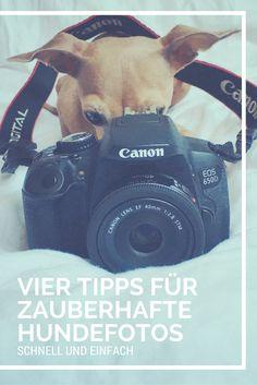 Einfach Tricks, damit auch Du wunderschöne Fotos von Deinem Hund machen kannst.