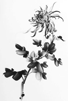 "Saatchi Art is pleased to offer the painting, ""Chinese Painting Ink Chrysanthemu… - Ink Painting Chinese Painting Flowers, Japanese Ink Painting, Chinese Flowers, Japanese Art, Chinese Brush, Chinese Art, Chrysanthemum Drawing, Chrysanthemum Chinese, Chinese Drawings"