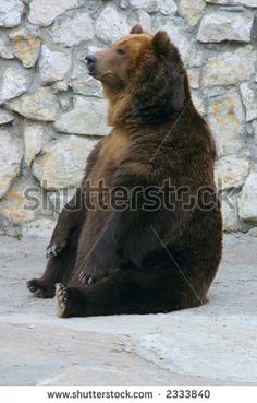 Brown bear sitting about a wall - stock photo