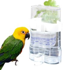 Misterolina Acrylic Bird Feeders And Automatical Waterers Drinking Bowls For Birds Pet Accessories Lovebird Pets Supplies Hot - Animals Bird Seed Feeders, Wild Bird Feeders, Bird Cages, Parrot Toys, Parrot Bird, Poultry Supplies, Pet Supplies, Pet Pigeon, Pet Supply Stores