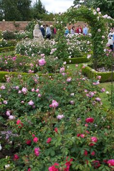 1000 Images About Garden Inspiration On Pinterest Rock