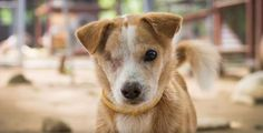 I am 7 years old and I survived as a street dog for over 6 of those. I managed to get by but things took a dark turn, when my eyes got worse to the point that I was almost blind. A kind person saw my struggles and brought me to the Soi Dog shelter here in Phuket, Thailand. https://www.facebook.com/SoiDogPageInEnglish/videos/1110562988985435/