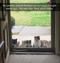 """""""My parents started feeding a stray kitten a couple weeks ago. This was their front porch today."""""""
