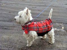 Pepper Pet Wear Dog Wear, Stuffed Peppers, Pets, How To Wear, Animals, Animales, Animaux, Stuffed Pepper, Animal