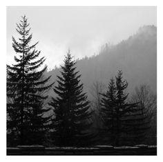 The beautiful Smoky Mountains