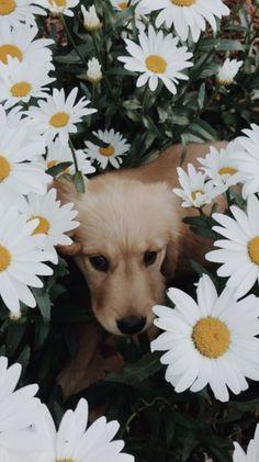 Wallpaper Cute Dog Puppys Golden Retriever 27 ideas for . - Wallpaper Cute Dog Puppys Golden Retriever 27 ideas for 2019 cute dogs - Cute Dogs And Puppies, I Love Dogs, Pet Dogs, Dog Cat, Doggies, Maltese Puppies, Cute Funny Animals, Cute Baby Animals, Animals And Pets