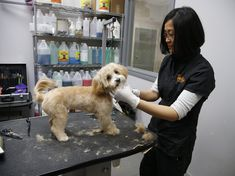 Pet spa owners livid over rent hike, but landlord counters it's 'market rate' Pet Spa, Being A Landlord, Pet Care, Toronto, Candle, Hiking, Sun, Marketing, Walks