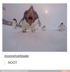 NOOOOOOOSTOOOPP