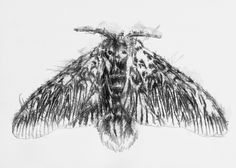 Moth, Artist Sean Briggs producing a sketch a day, prints available at https://www.etsy.com/uk/shop/SketchyLife  #art #drawing #http://etsy.me/1rARc0J #moth