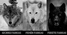 Trauma, Husky, Wolf, Minden, Animals, Angel, Animais, Animales, Animaux
