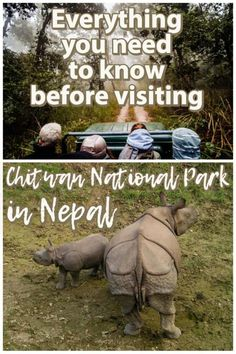 Looking to take a Chitwan Jungle Safari in Chitwan National Park! Here is a in-depth guide for everything you need to know about visiting Nepal's oldest national park! Asia Travel, Travel Nepal, Ways To Travel, Travel Ideas, Dugout Canoe, Nepal Culture, Stuff To Do, Things To Do, Elephant Ride