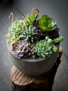 this site has some gorgeously creative ideas for indoor succulents - Lila B Design Perfect for apartment living
