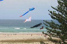 Kirra Beach, Coolangatta  Qld. Australia.