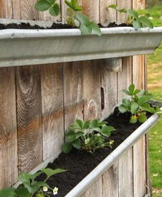 Looking for ideas for small garden? Why not try rain gutter garden ideas? Check out these clever vertical rain gutter garden ideas. Gutter Garden, Herb Garden, Vegetable Garden, Garden Bed, Easy Garden, Container Gardening, Gardening Tips, Organic Gardening, Gardening Quotes