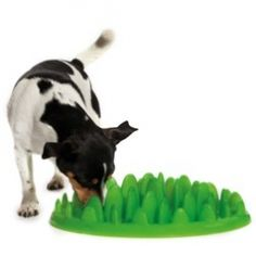 Fun and functional slow down feeding products for dogs!