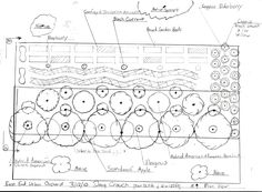 Orchard layout / plan /design. Permaculture garden / orchard.