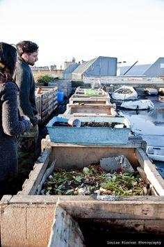 roof top composting, urban farm, Dublin, Ireland