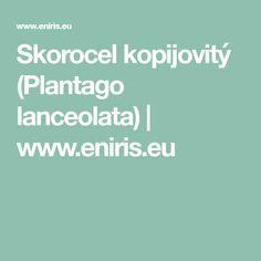 Skorocel kopijovitý (Plantago lanceolata) | www.eniris.eu