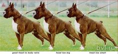 #Boxer Trinity Heart Boxers, Boxer Breed, Horses, Dogs, Animals, Boxer Dogs, Animales, Animaux, Horse