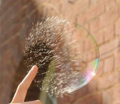 Soap bubble goes 'Pop' @TimedPerfectly