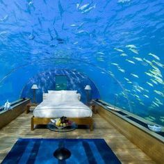 A bed in the fish tank