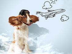 Traveling by Air with Your Dog #airport #dogs #travel