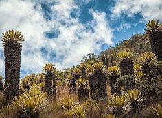 """Parque Nacional Natural de los Nevados - Manizales, Colombia cecaphoto.com | © Cesar Calderón. All rights reserved. • • #cecaphoto #cesarcalderonphotography #colombia #manizales #mountainscape #nationalpark #park #volcan #volcano #travelblogger #travelphotography #travelblog #landscapelover #igerscolombia #igerscolombiaext #nevado #nevadodelruiz #hdr #hdrphotography #earthday #cloudlovers"" by @cesarcalderonm (C E S A R   C A L D E R Ó N). #turismo #instalife #ilove #madeinitaly #italytravel…"