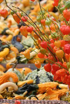 autumn market, Gutsch, Lucerne, Switzerland