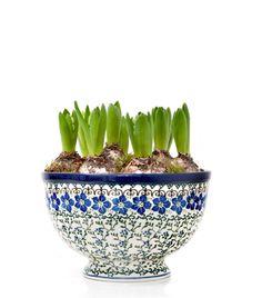 De hyacintbollen heb ik al weer in de winkels gezien; mooi zo'n schaal vullen met blauwe hyacinten: dat is dubbel genieten!