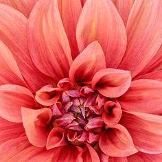 lovely colour ...