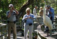 Corkscrew Swamp Sanctuary | Audubon Corkscrew Swamp Sanctuary & Blair Audubon Center 375 Sanctuary Road West Naples, FL 34120