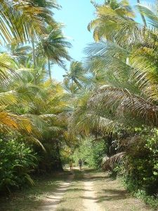 Beach & Walking trail in the Humacao Nature Reserve - East coast