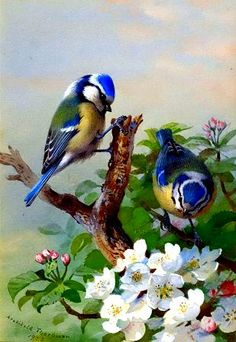 Art Birds Vintage Painting On Canvas~ Artist: Archibald Thorburn Pretty Birds, Beautiful Birds, Beautiful Places, Beautiful Pictures, Blue Tit, Bird Pictures, Vintage Birds, Vintage Art, Vintage Ephemera