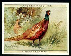 Players, Game Birds & Wild Fowl 1928. No14 Common Pheasant.