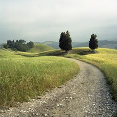 Italy. Tuscan road