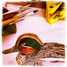 #painting #watercolor #nonfinita #greenwingedteal  #acuarela si terminar de #cerceta común #birdfreaks #fotobirding #birdsofinstagram #anascrecca #акварель #птицы #birdwatching in #ElPratdeLlobregat - @pacotorresill- #webstagram
