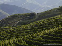exploring the terraced vineyards of portugal w/df