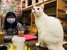 Rescue Cat Cafes in Taipei - Cute Animals Cat Cafe, Taipei, Cute Animals, Cafes, Pretty Animals, Cute Funny Animals, Cutest Animals