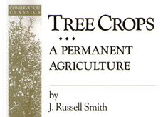 David Holmgren on tree crops + a book giveaway « Milkwood: homesteading skills for city & country