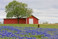 Image from http://bobjphotography.com/wp-content/uploads/2011/09/Country-Texas-14.jpg.