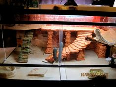 bearded dragon decor - Google Search