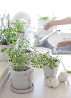 Így öntözzük a szobanövényeket! - Lakáskultúra magazin