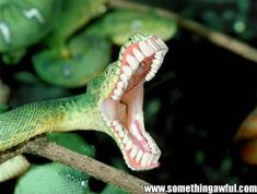 pictures of crazy animals - Google Search