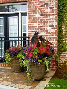 Outdoor Flowers, Outdoor Plants, Outdoor Gardens, Potted Plants, Shade Plants, Container Flowers, Container Plants, Container Gardening, Vegetable Gardening
