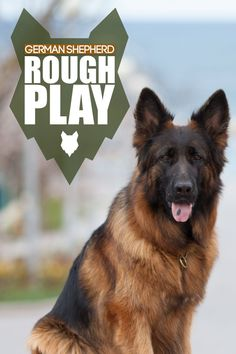 Does your German Shepherd play rough? Check out our latest video on how to address this behaviour with tips and insights. More awesome dog information at Fenrir Canine Show and Fenrir Canine Leaders. German Dog Breeds, Large Dog Breeds, Large Dogs, Weimaraner, Doberman, Guard Dog Breeds, Giant Schnauzer, Dog Information, Dog Behavior