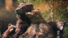 Center Parcs TV Advert 2015 – Bears - YouTube