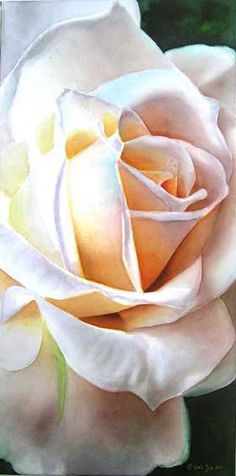 White Rose on Canvas, 12″x24″