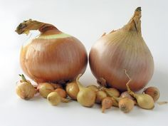 List of Prebiotic Foods. Prebiotics are components of foods that feed or support the growth of beneficial bacteria, or probiotics, in your large intestine. Planting Onions Bulbs, Prebiotic Foods, Onion For Hair, Homemade Hamburgers, Growing Veggies, Growing Onions, Regrow Hair, Hair Growth Treatment, Hair Loss Remedies