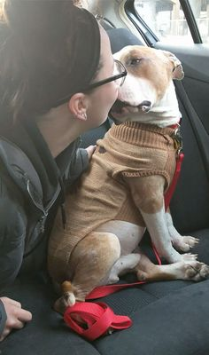 When Kayla Filoon, a student who volunteers as a dog walker at an animal shelter in Philadelphia, saw Russ the pit bull for the first time, she knew there was a special connection between them. He came in as a stray, and he was really beat up, Filoon told The Dodo. He was missing fur on his tail and ears. He was also terribly skinny. The 20-year-old woman added: He was just sitting there calmly, staring at me... And I thought... I need to take him now.