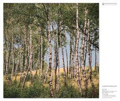 Birkenwald Bostalsee, Landkreis Sankt-Wendel Echter Fotoabzug unter Acrylglas 80,0 x 80,0 cm Limitierte Auflage www.korenbrothers.com/birkenwald Ein Bild des Buches «SaarWunderland» © Koren Brothers. Visundi GmbH. All rights reserved.